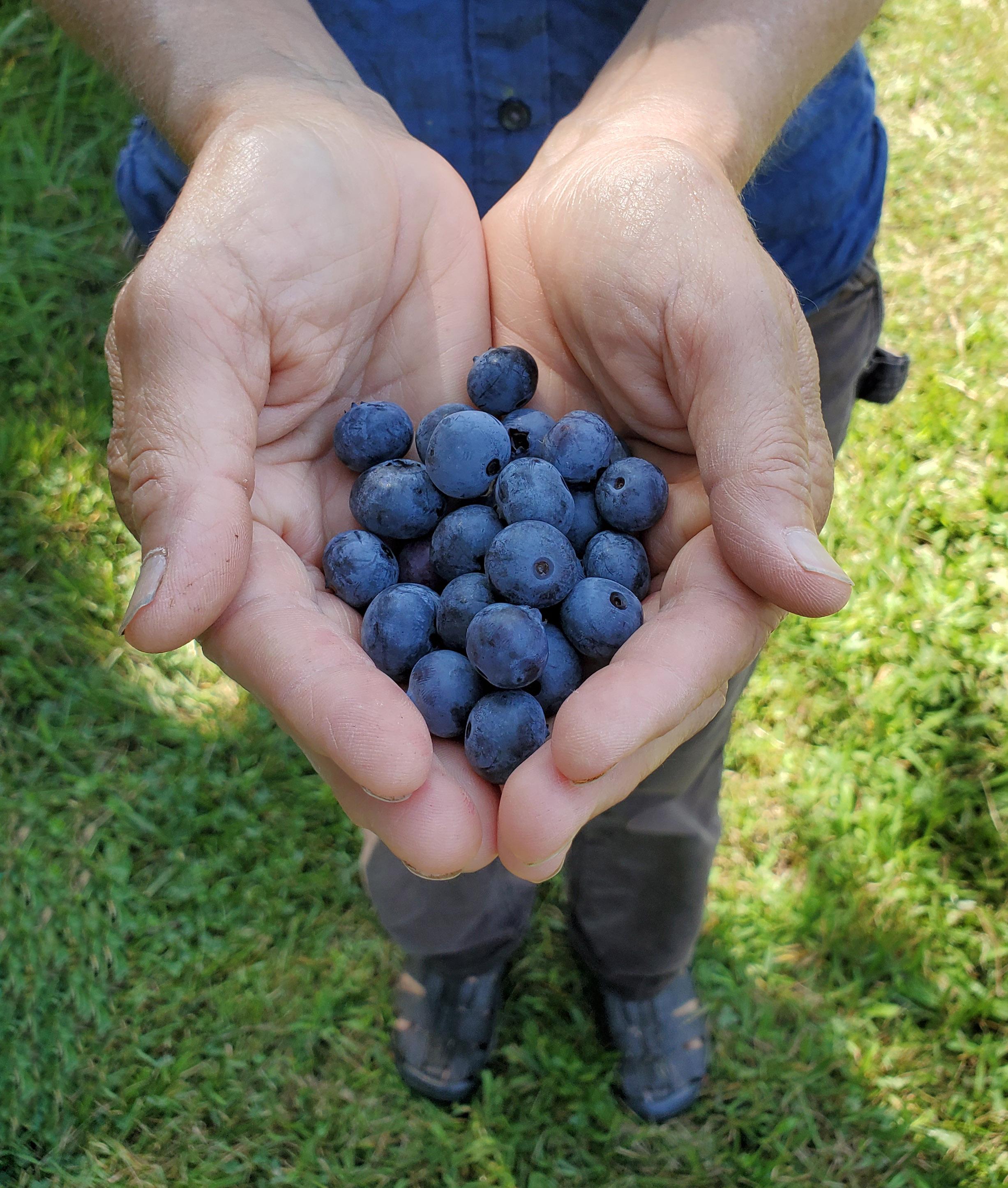 Blueberry Offering Photo: Nadine Mazzola