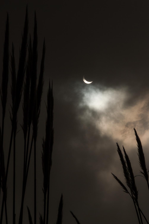partial eclipse 5.jpg