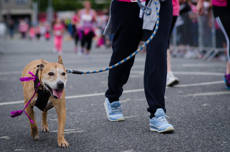 Race for life blog 2015-210.jpg