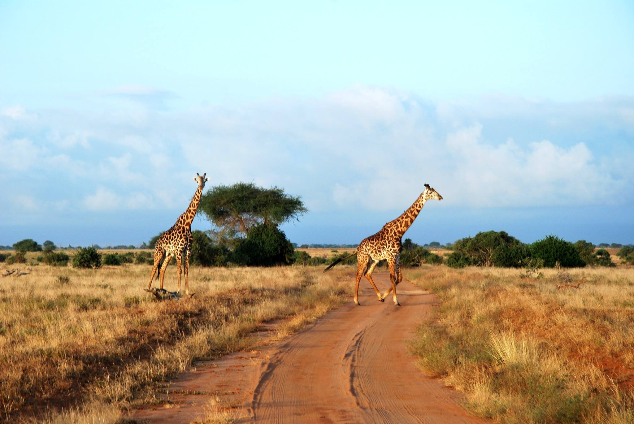 Safari Kenia - Getoutoftown.jpg