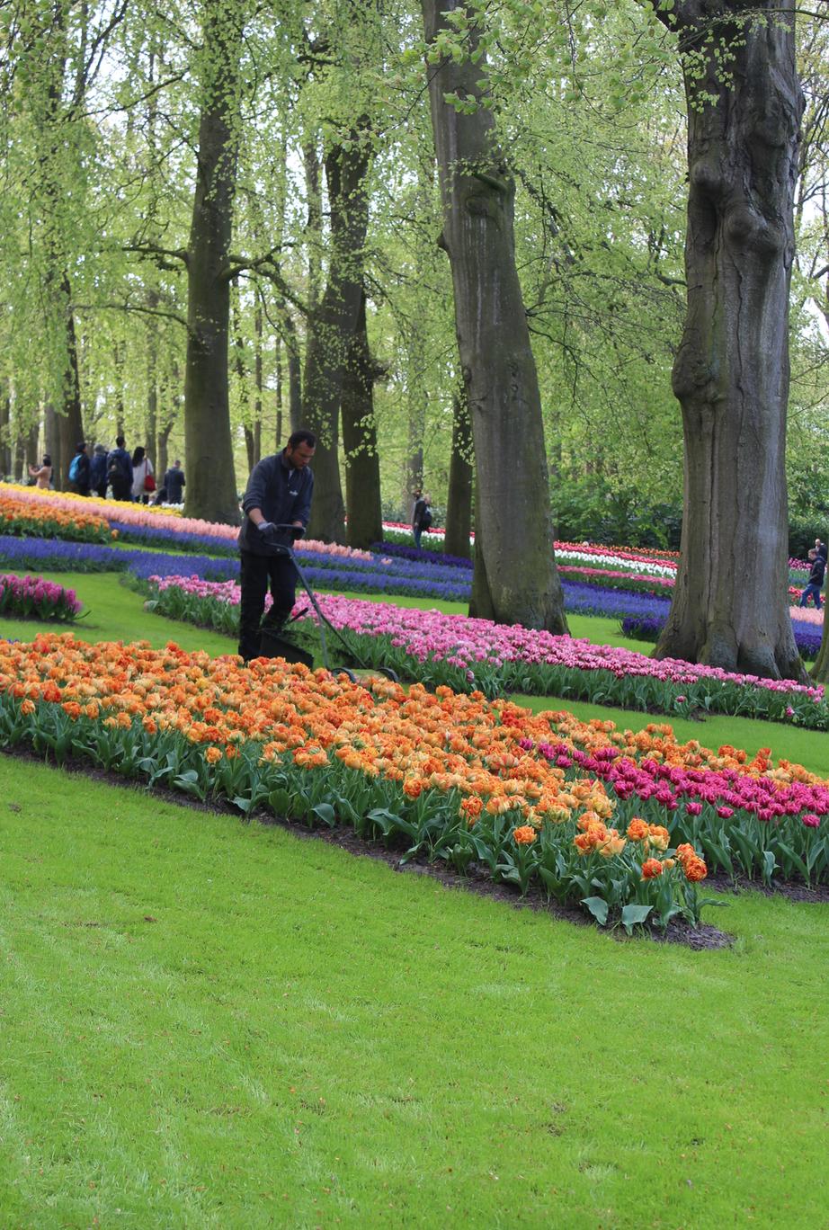 40 tuinmannen onderhouden permanent de bloemen, planten en het gras.