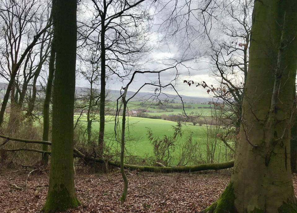 Dit vond ik het mooist: zicht op de glooiende velden vanuit het bos.