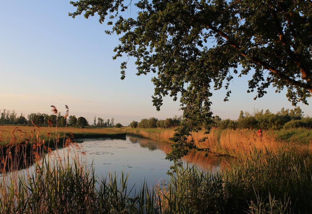 sunrise biesbosch.png