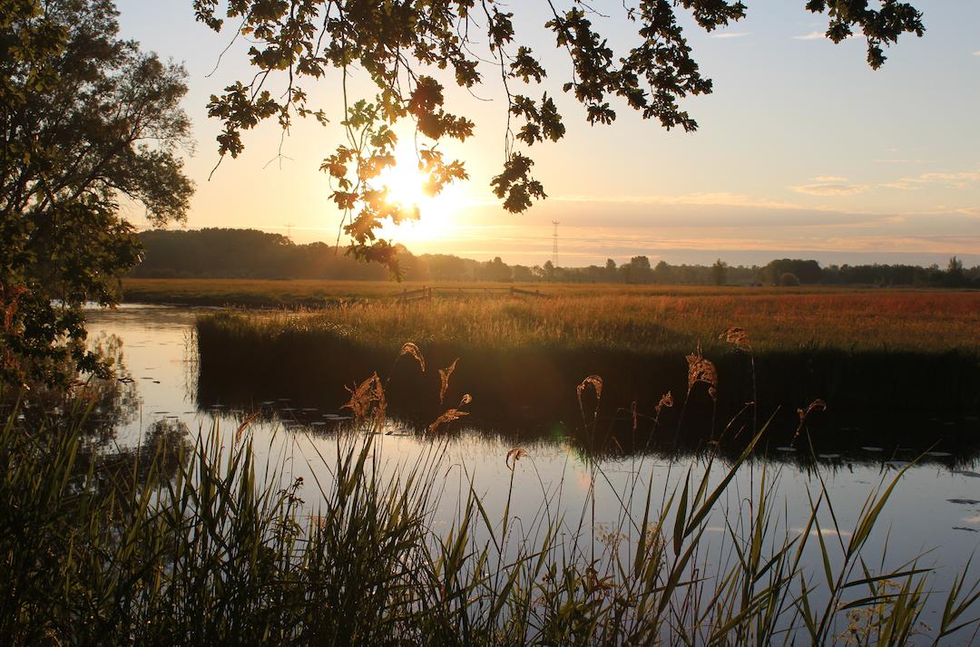 prachtige biesbosch bij zonsopgang.png