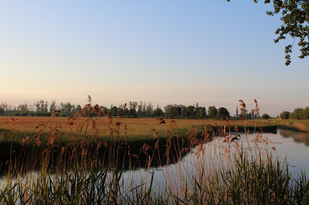 zonsopgang biesbosch.png