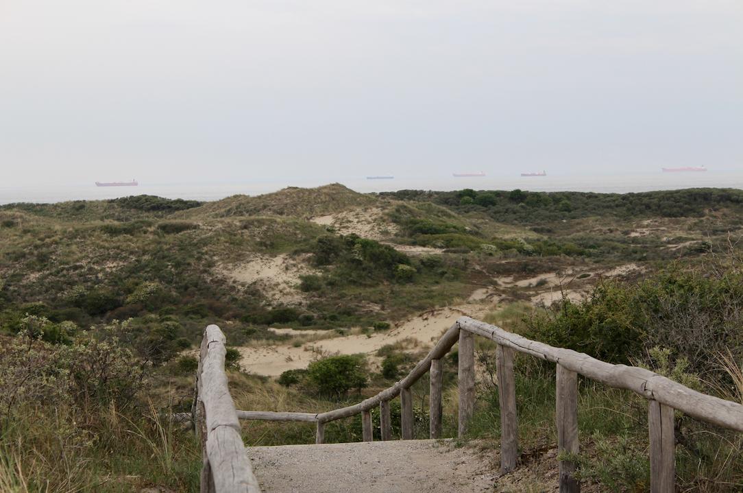 hollandse duinen uitzichtpunt.png