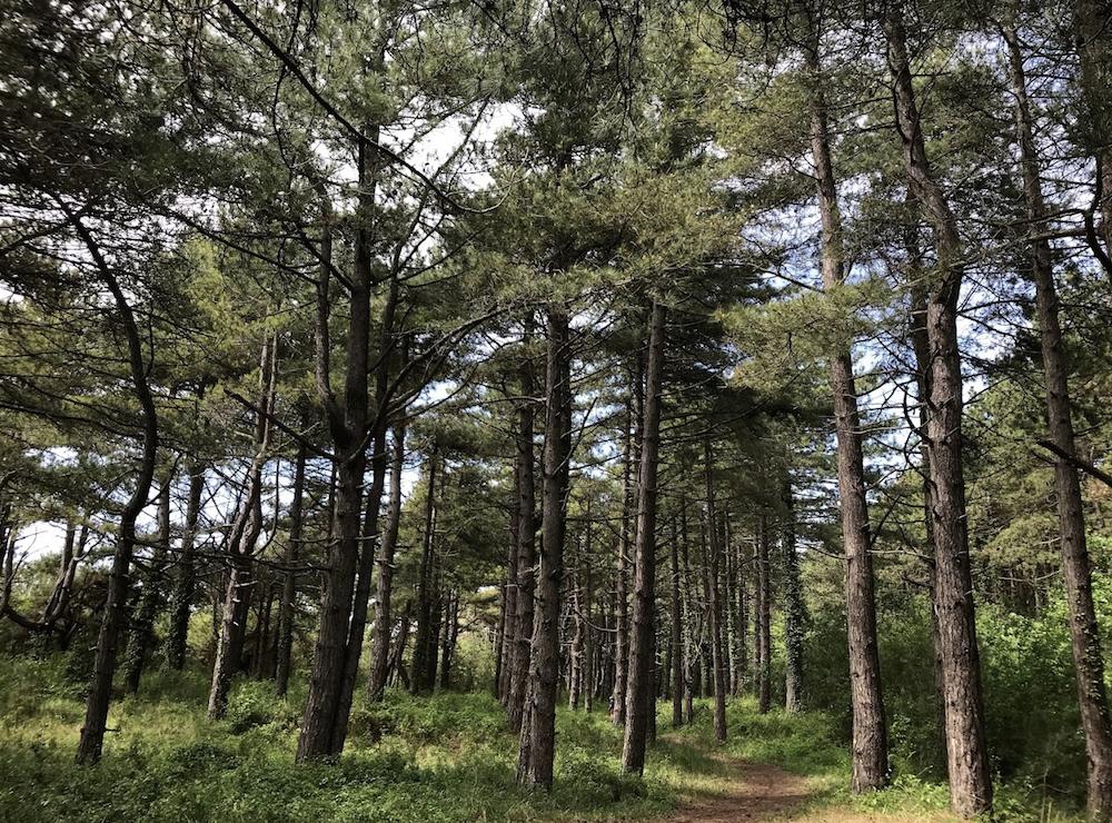 Naast de baai kan je ook in de bossen wandelen. Lekker verkoelend op warme dagen.
