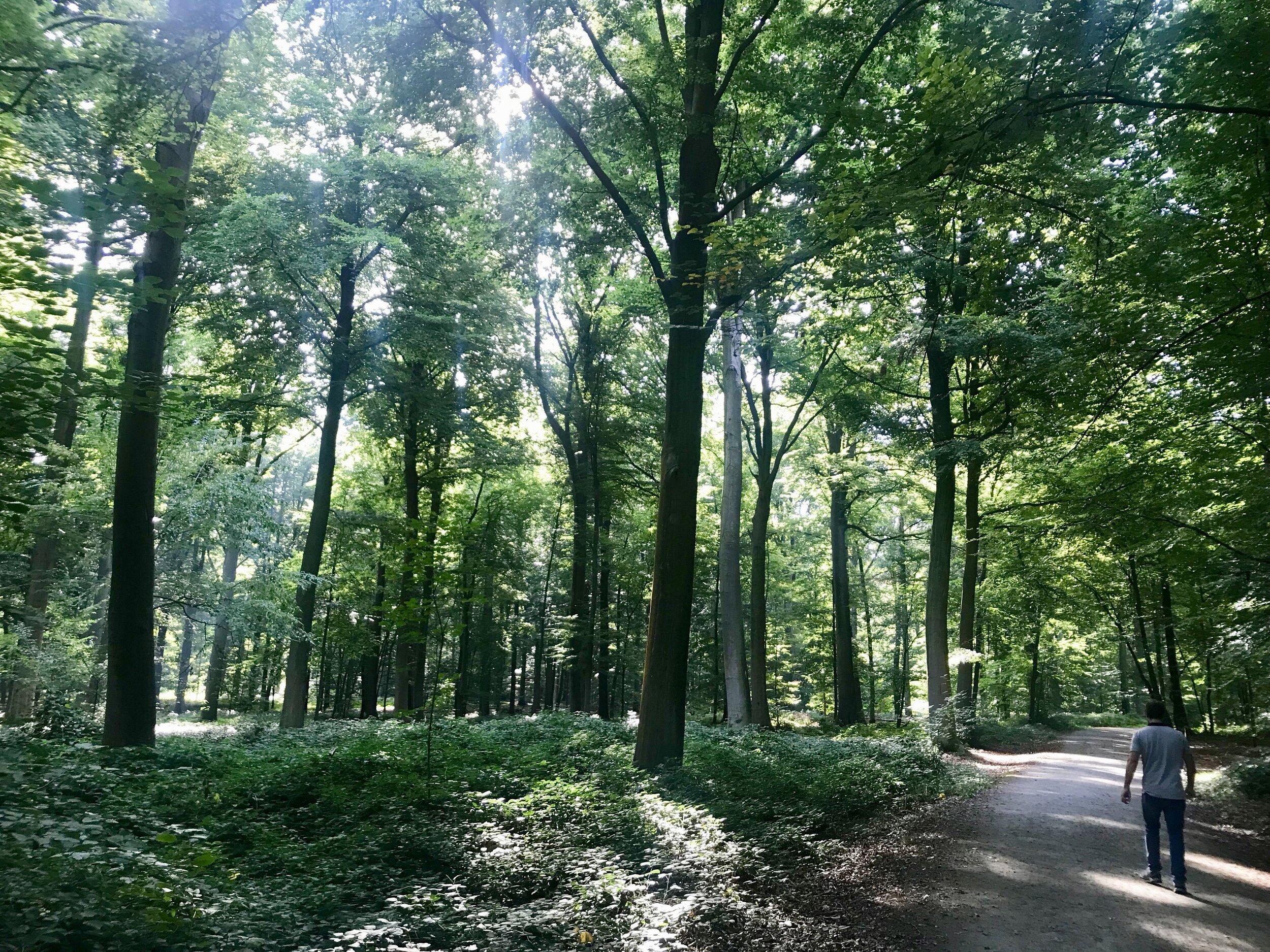 Baden in het bos.
