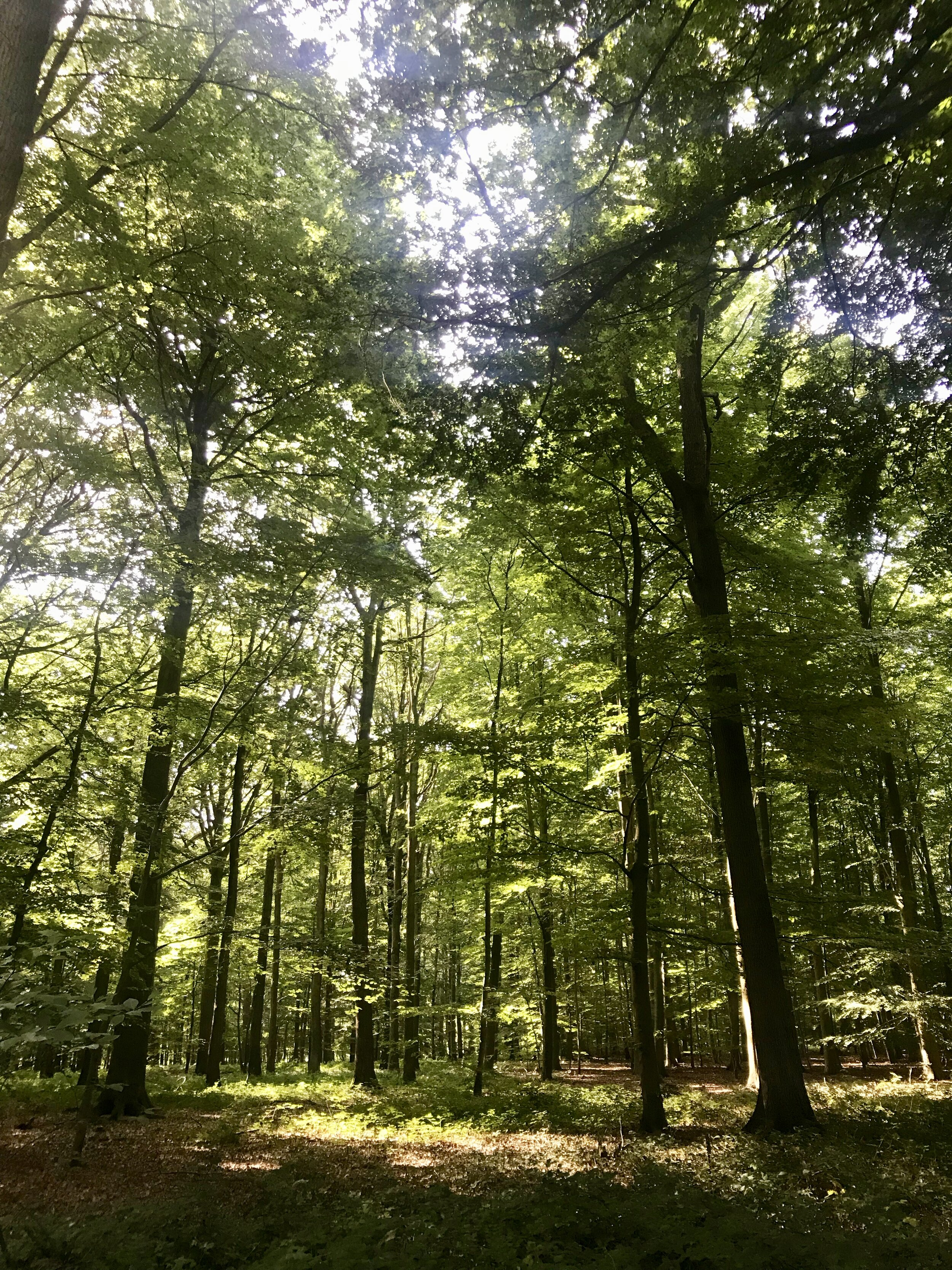 's morgens buggenhout bos