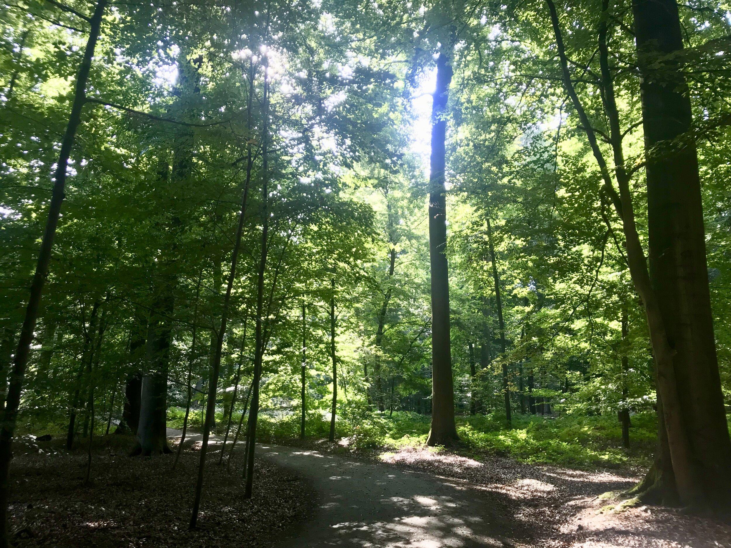 buggenhout bos scheldeland