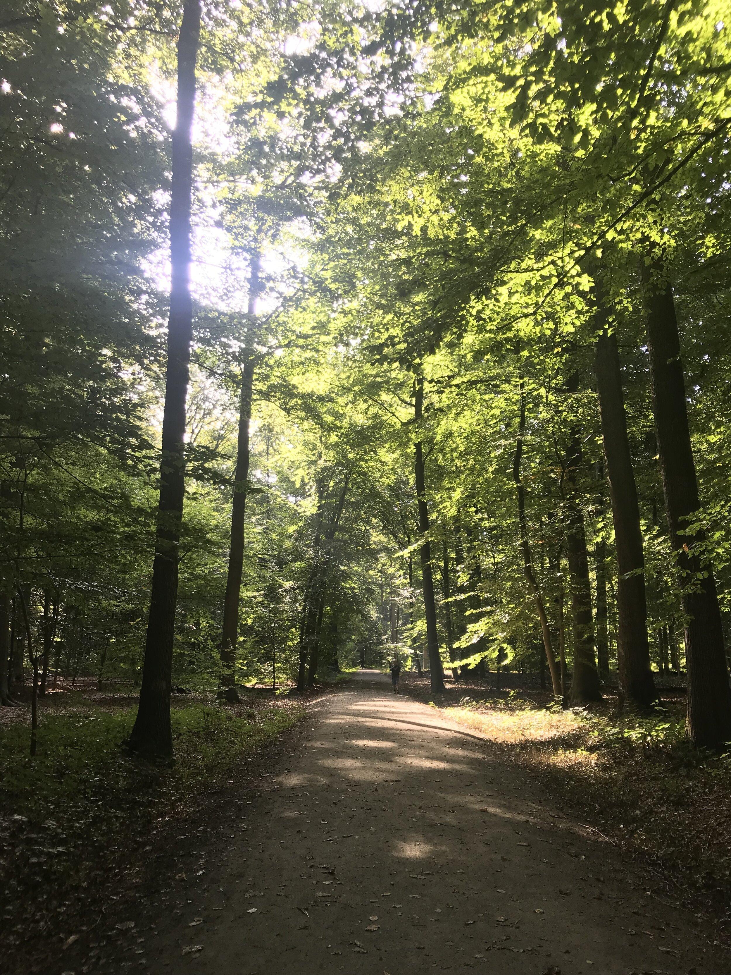 buggenhout bos oost-vlaanderen