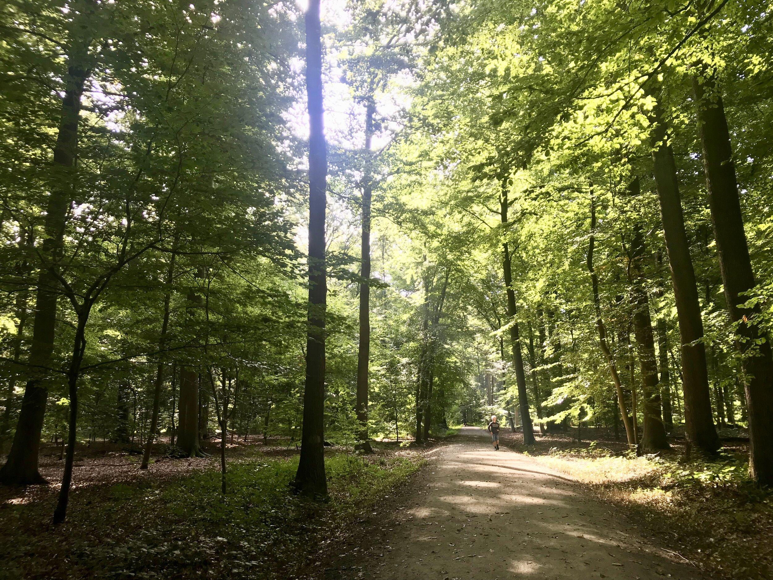 buggenhout bos wandelen