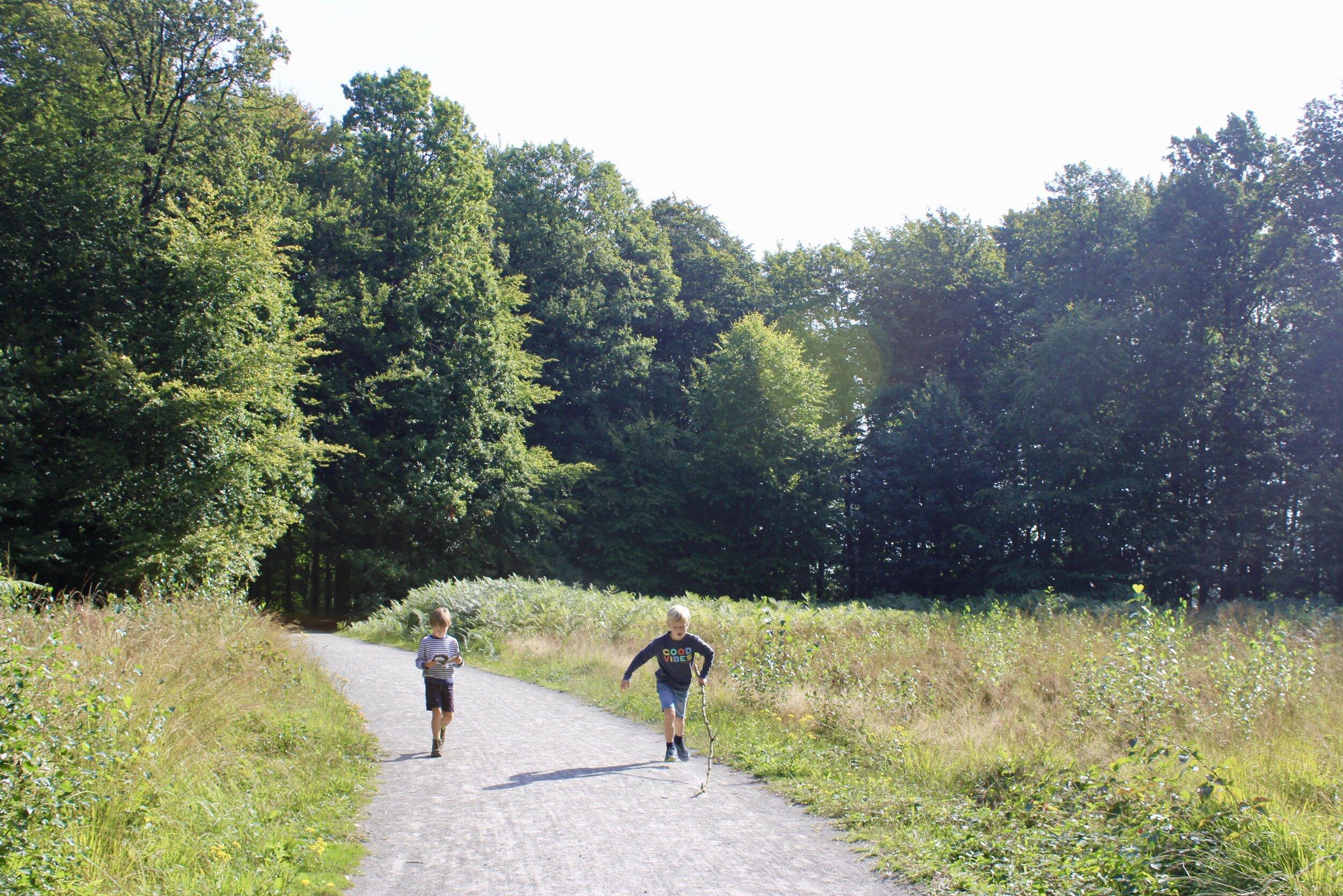 wandelen met kinderen buggenhout bos
