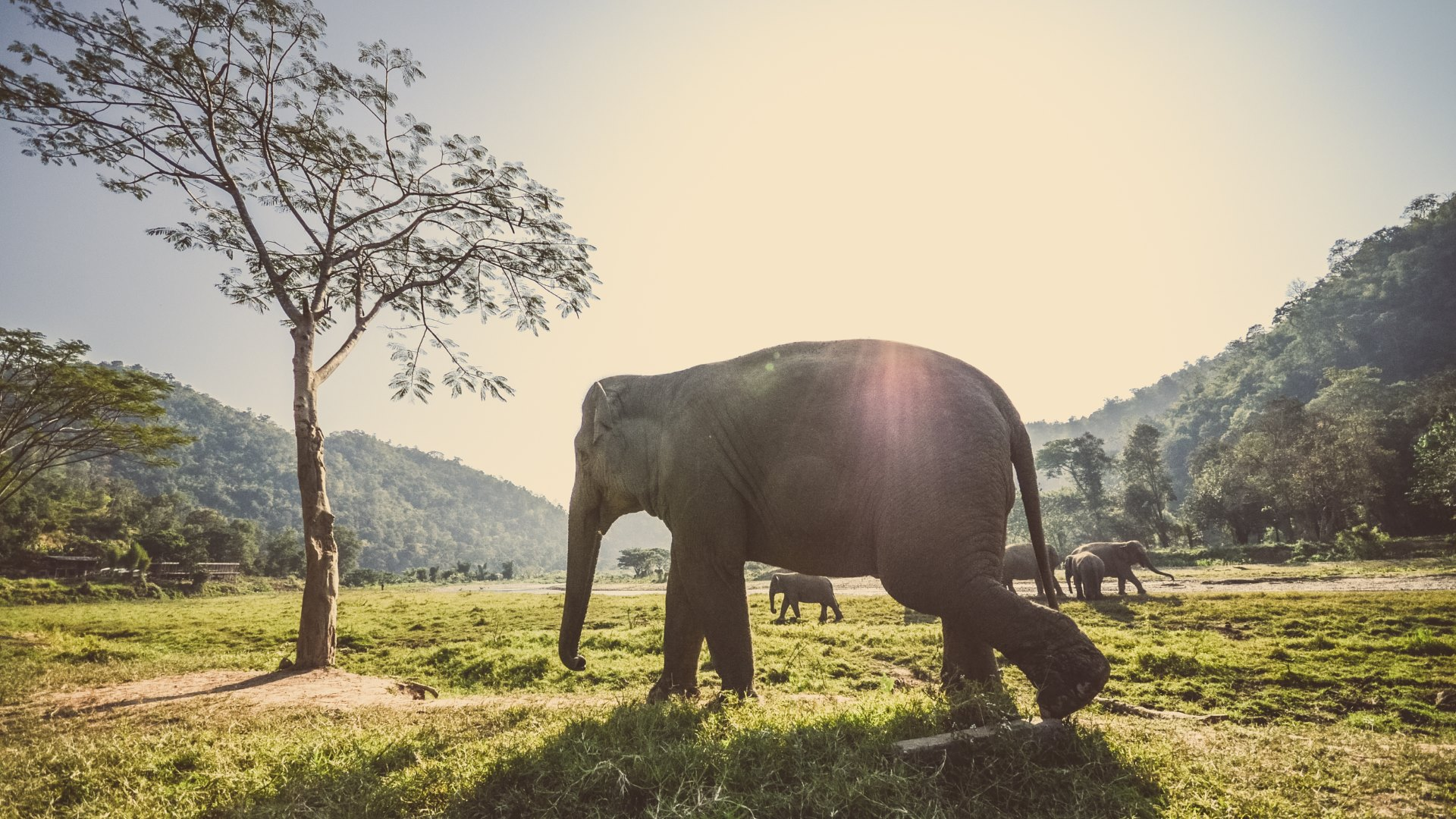 Thai-Elephants-uhd-wallpapers.jpg