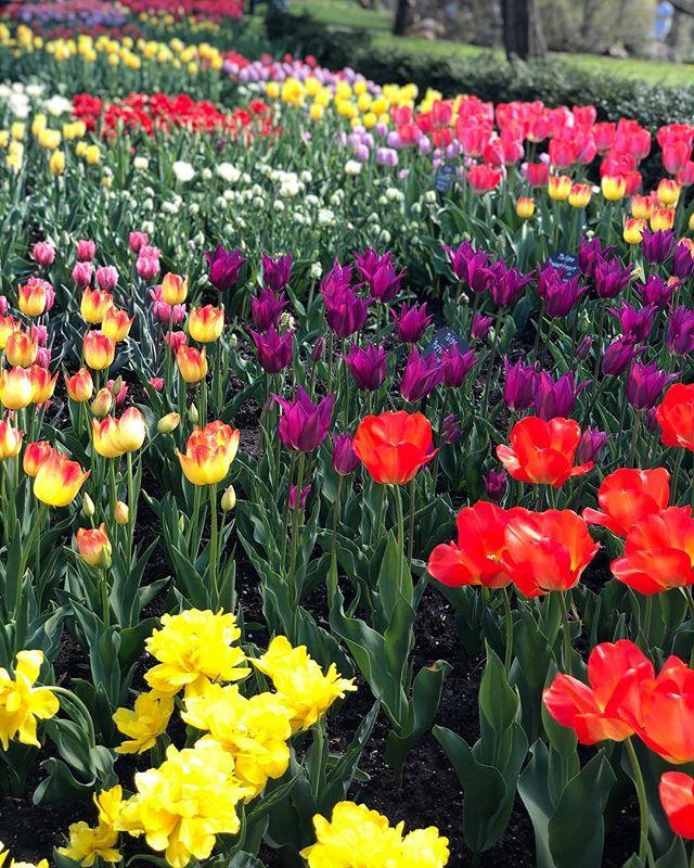 Botanic Garden Beauty, No Filter Needed🌷🌿🌸🌻 * * * #barelylatergram #eastersunday #brooklynbotanicgarden #nofilter #yesitsbotanicnotbotanical #weird #nature #beauty #flowers #tulips #sakura #bonsai #getoutside #exploreyourcity