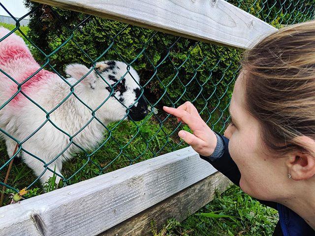 Made a friend 🐑🐑🐑 * * * 📸: @peleyal * * * #travel #ireland #killarney #killarneynationalpark #hiking #sheep #lamb #cutie #animalfriends #baaaa