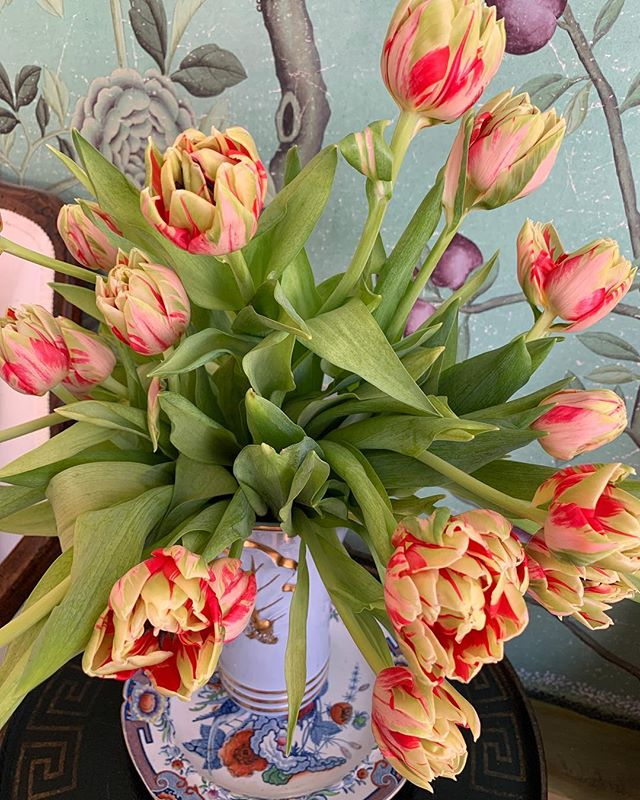 I think the biggest gift of April are these stunning tulips after seeing them at @_filoli last weeks I am buying every gorgeous one I see found these beauties yesterday 🌷🌷🌷🌷🌷🌷#almosteaster