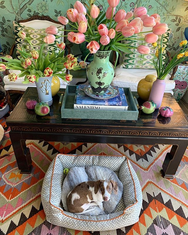 Gigi enjoying some sun and tulips 🌷🐶🌷🐶🌷 #indoorgarden #maximalist