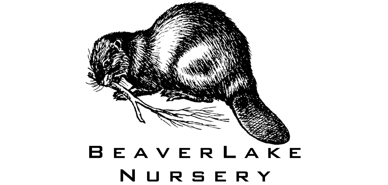 Beaverlake.jpg