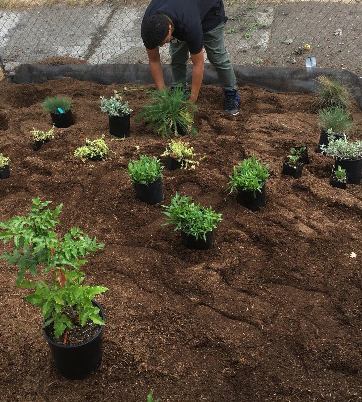 Preparing plants for a native garden.
