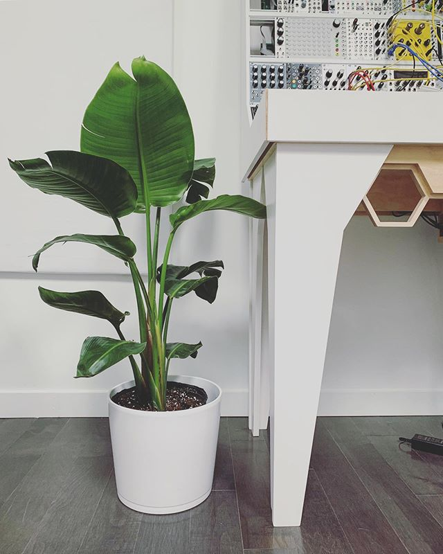 What should we name the new studio plant! 🌱