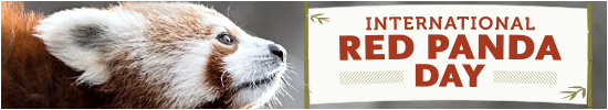 International Red Panda Day Website Banner