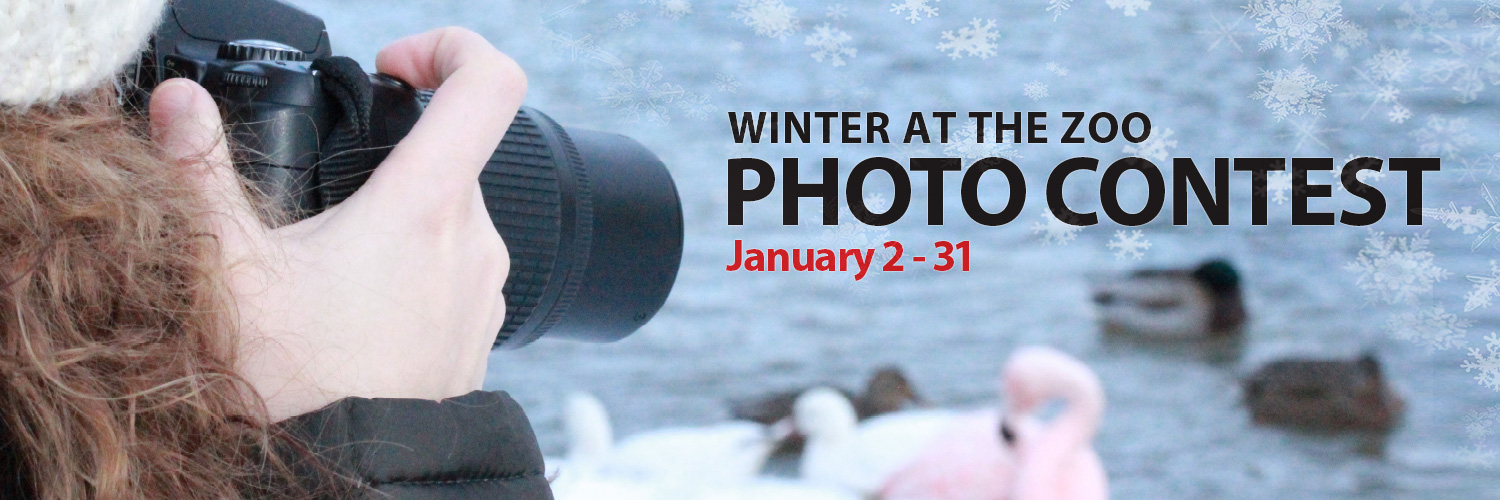 2015 Winter at the zoo photo contest twitter header