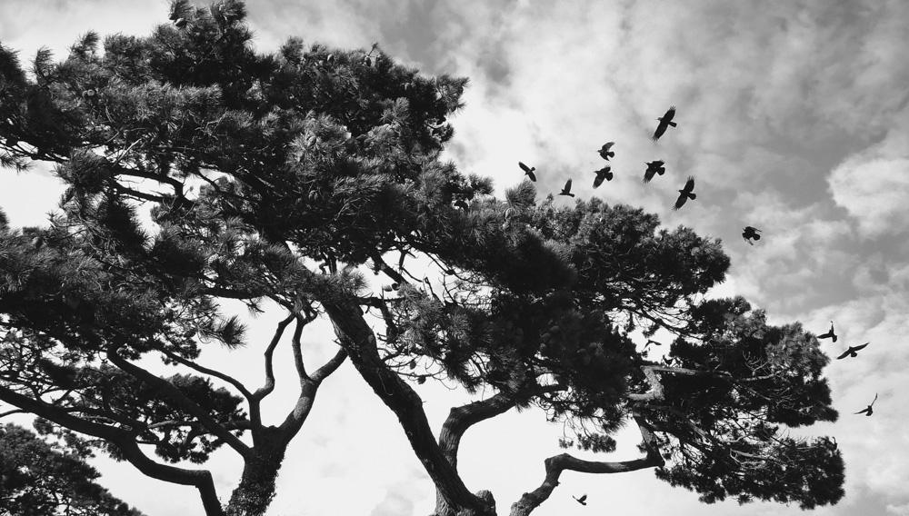 day_275_nk_2012_tree_rooks_0008.jpg