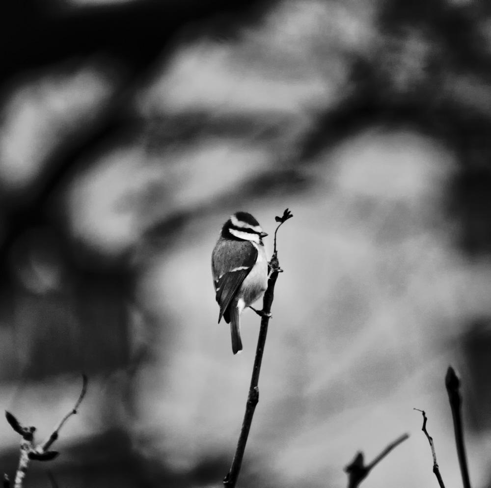day_325_px_2012_birds_garden_0139b.jpg