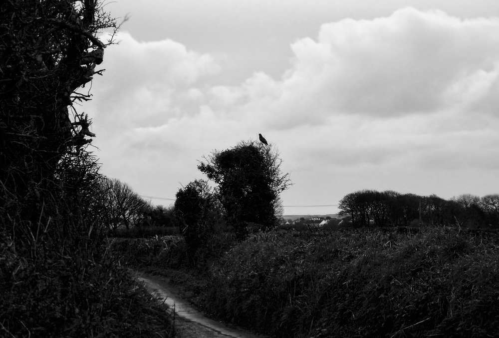 day_353_nk_2012_wendron_roweslane_0007.jpg