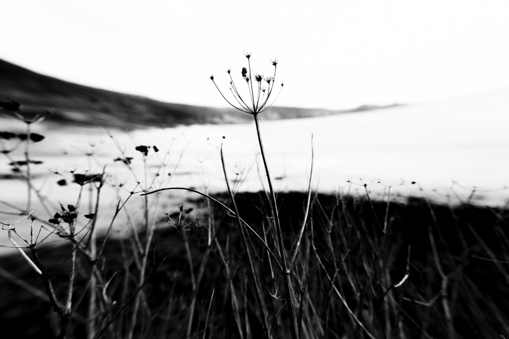Coast Plants Fading III