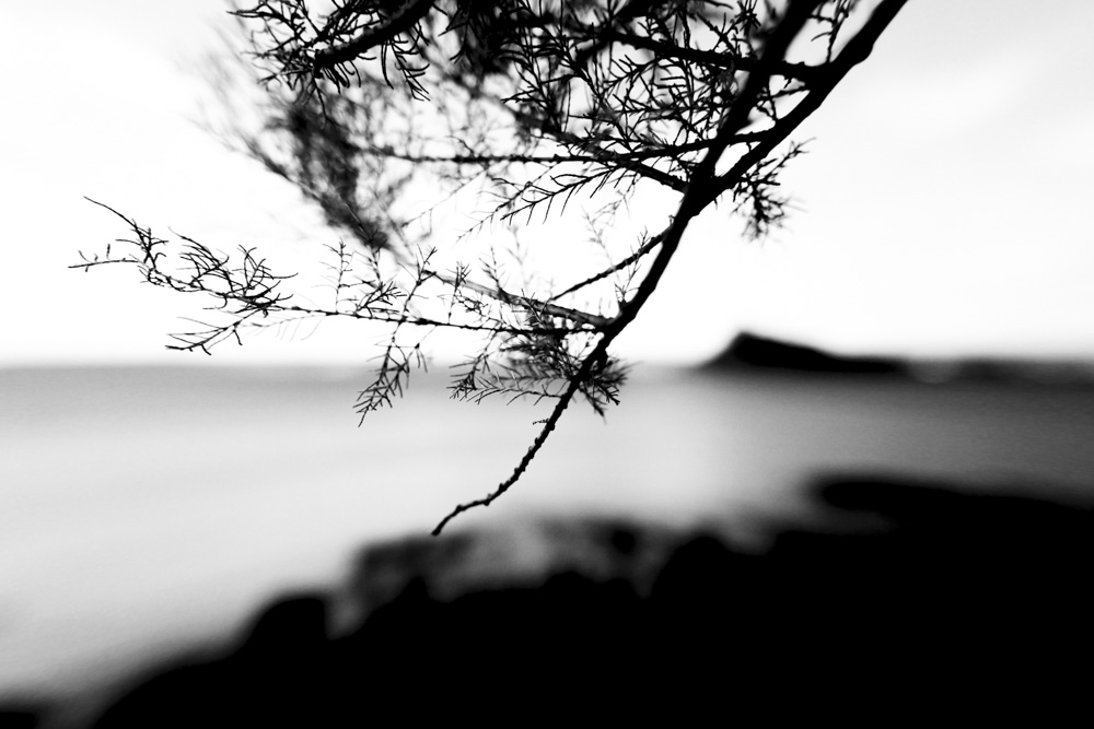 Coast Plants Fading VI