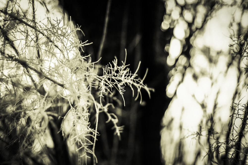 Coast Plants Fading VII