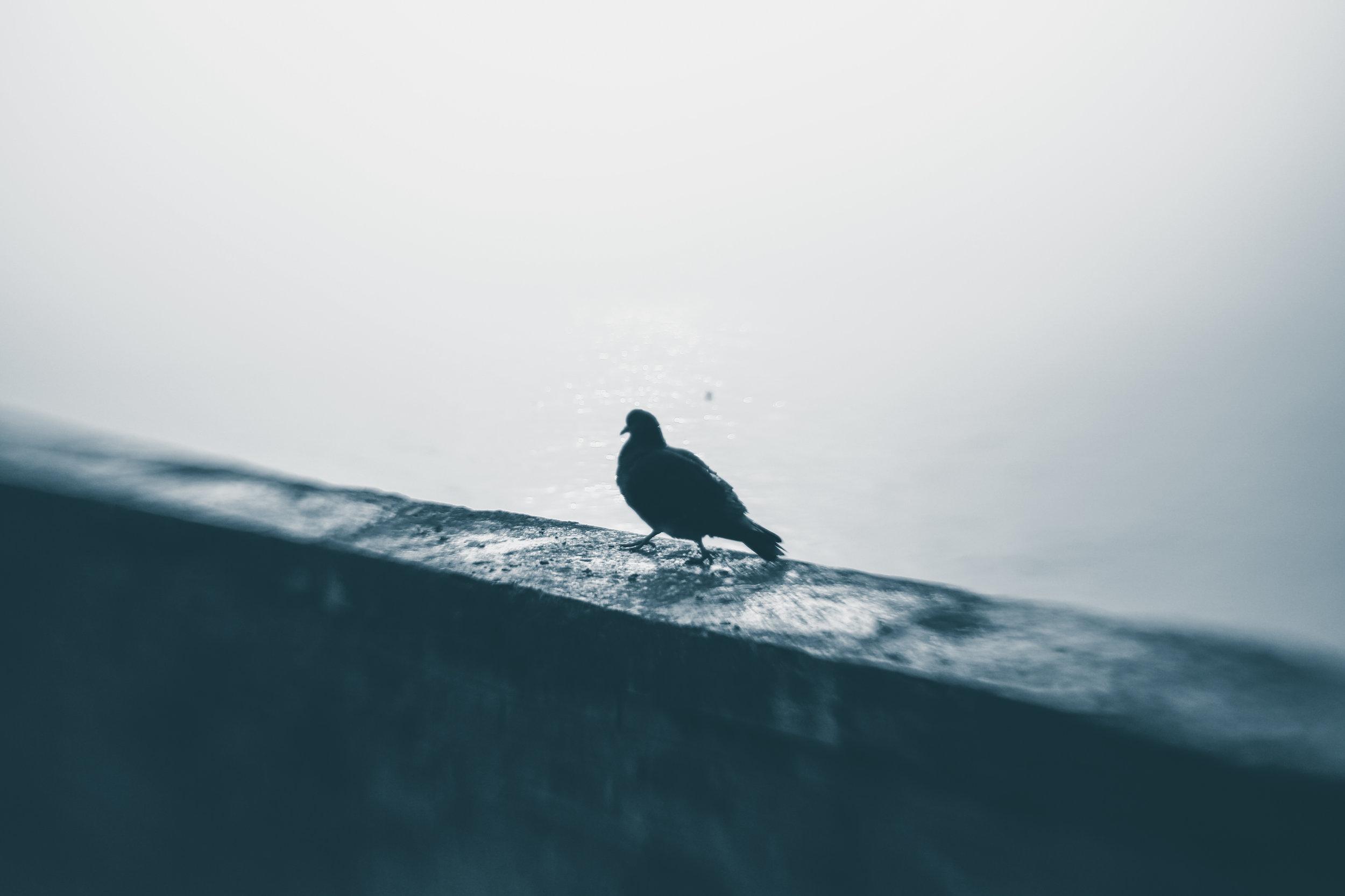 20181229_veniceLB_castello_fog-56.jpg