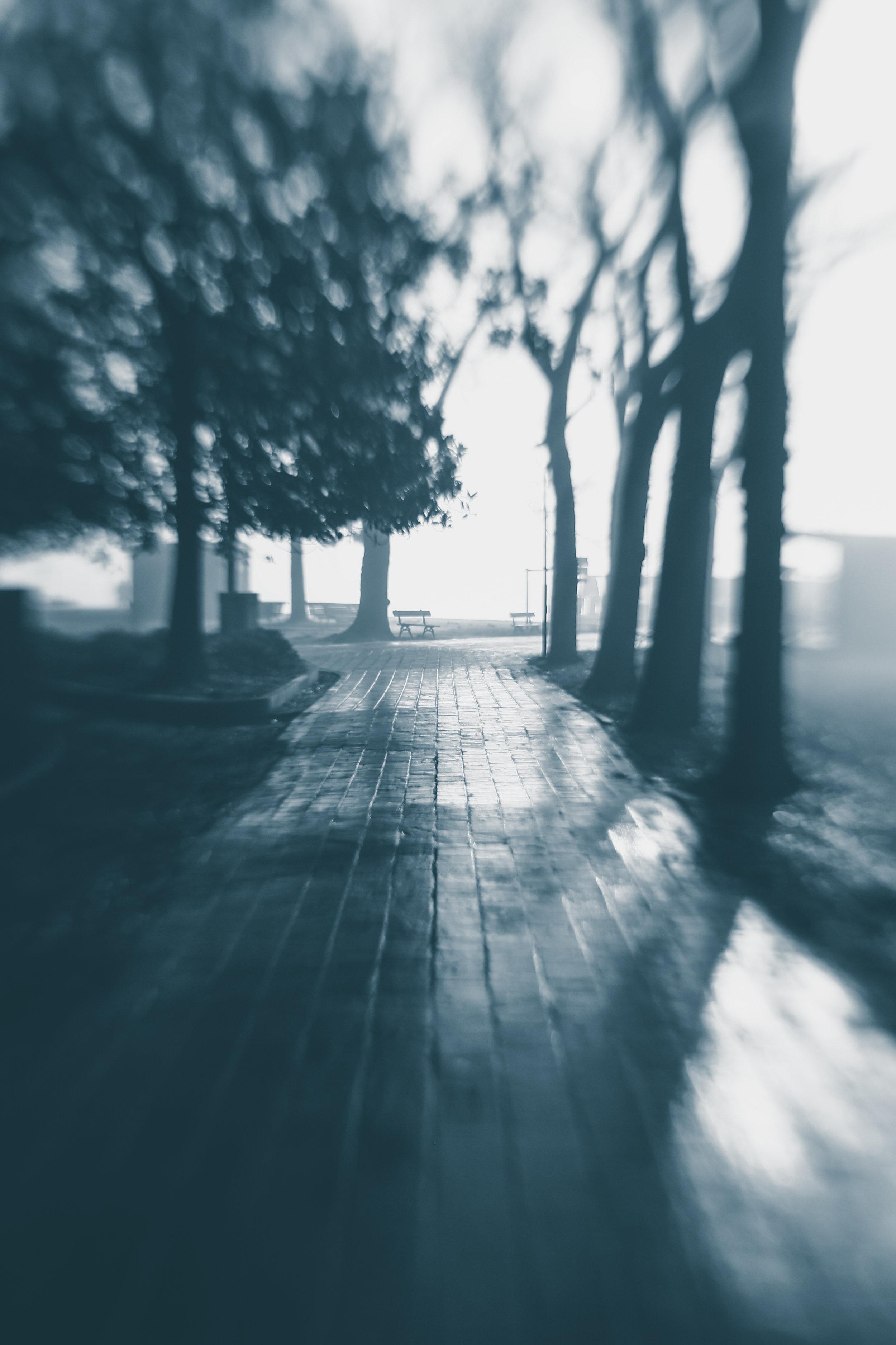 20181229_veniceLB_castello_fog-94.jpg