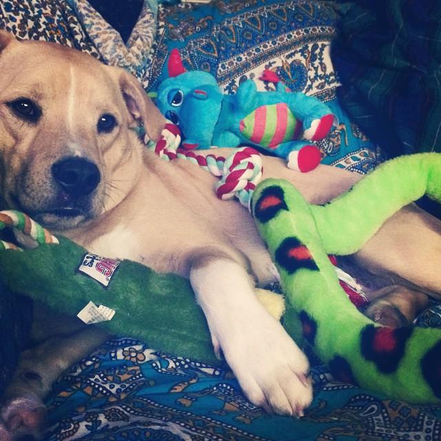 Eddie VT Dog Rescue