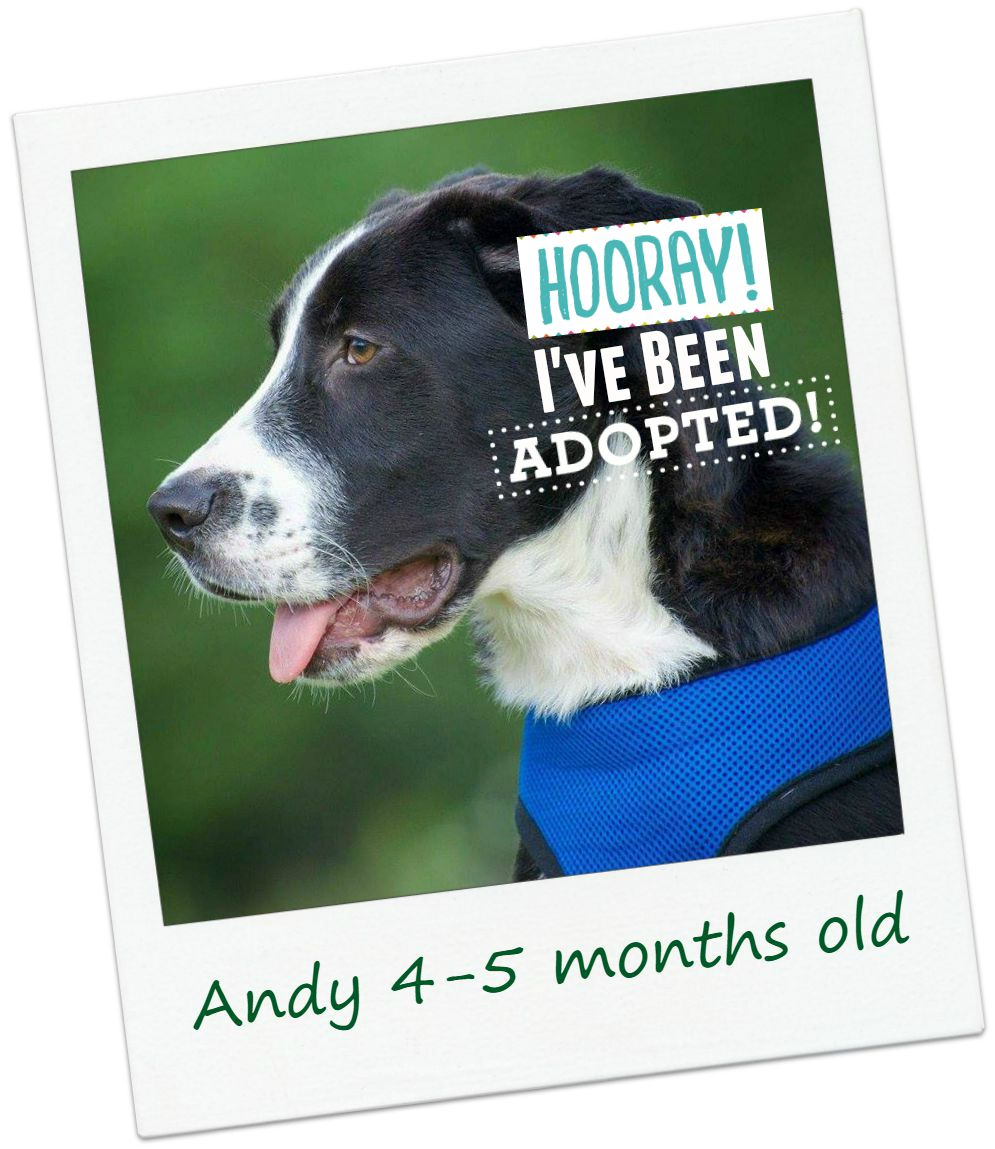 Andy_adopted.jpg
