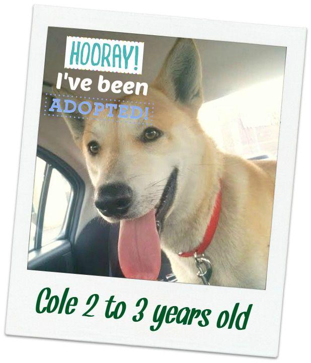 cole_adopted.jpg