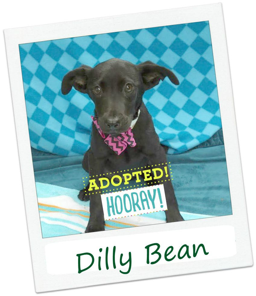 diny_adopted.jpg