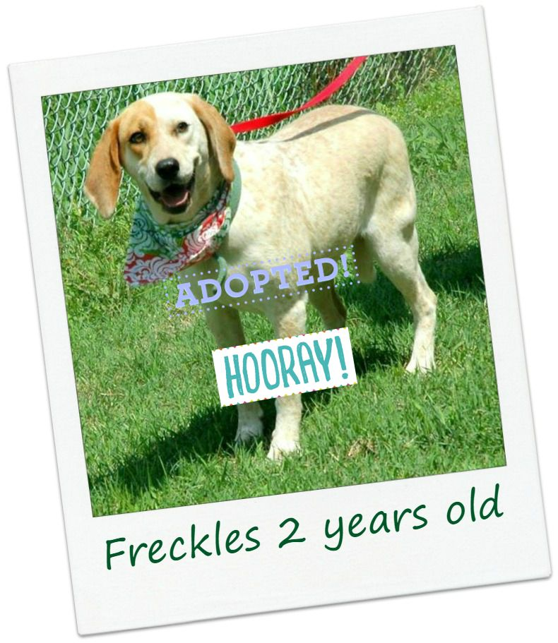 freckles_adopted.jpg