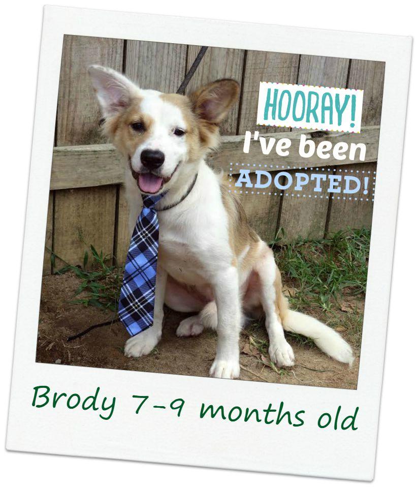 Brody_adopt.jpg