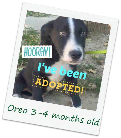 oreo_adopted.jpg