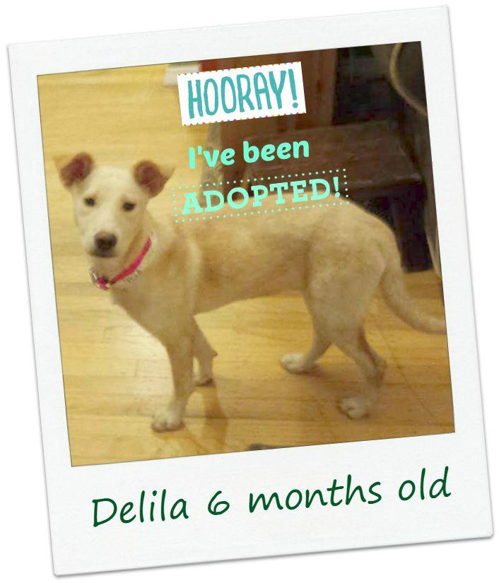delila_adopt.jpg
