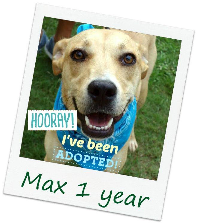 max_adopt.jpg