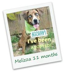 Melizza_adopted.jpg