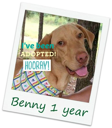Benny_adopt.jpg