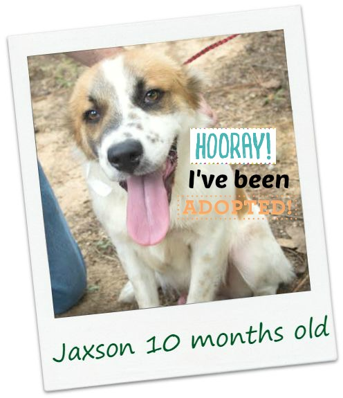 jaxson_adopt.jpg