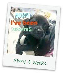 Mary_adopt.jpg