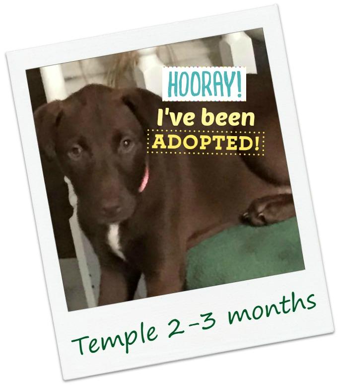 temple5_adopt.jpg