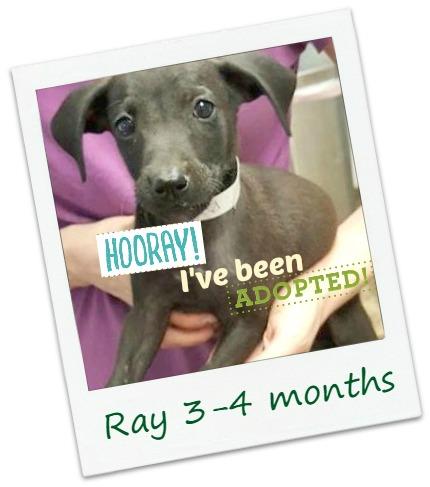 Ralph_Ray_adopt.jpg